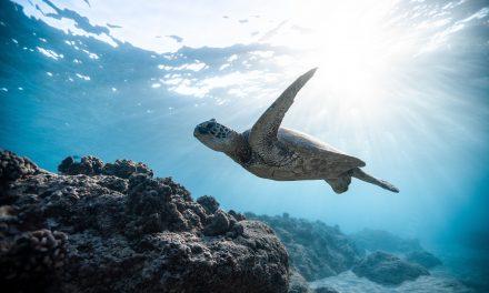 Le 8 juin : Journée mondiale de l'océan